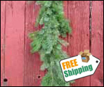 Fresh Fraser Fir Christmas Garland