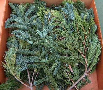mixed cut christmas greens - Christmas Greens